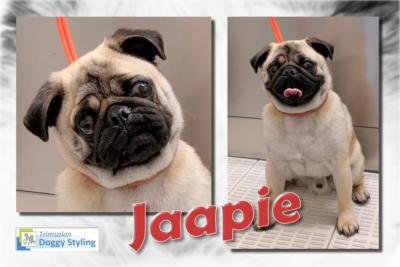 Trimsalon Doggy Styling - Jaapie