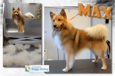 Trimsalon Doggy Styling - Max
