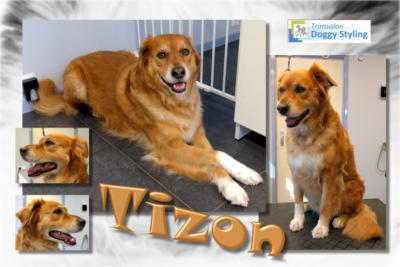 Trimsalon Doggy Styling - Tizon