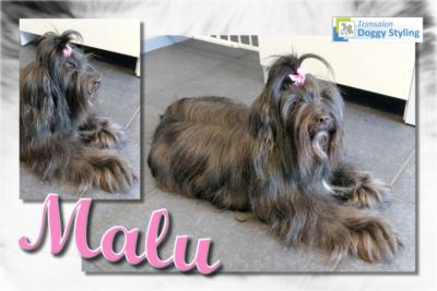 Trimsalon Doggy Styling - Malu