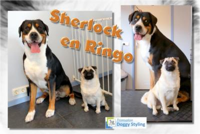 Trimsalon Doggy Styling - Sherlock en Ringo