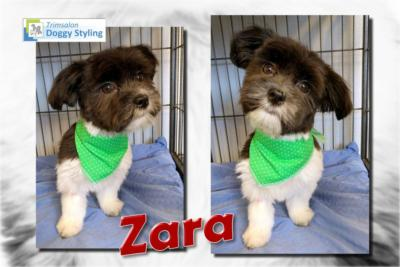 Trimsalon Doggy Styling - Zara