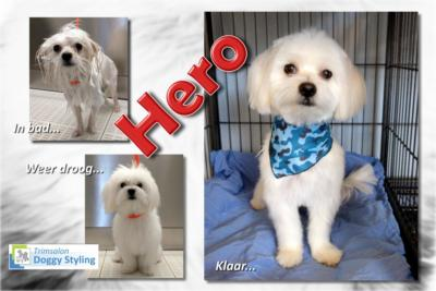 Trimsalon Doggy Styling - Hero