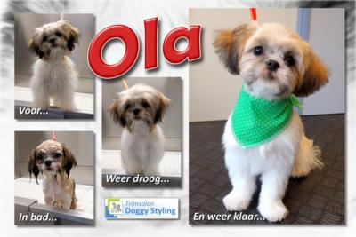 Trimsalon Doggy Styling - Ola