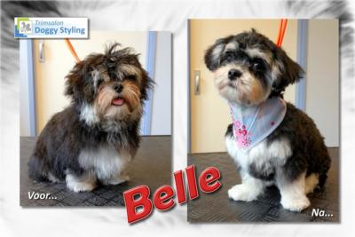 Trimsalon Doggy Styling - Belle