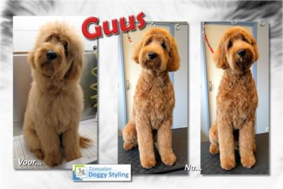 Trimsalon Doggy Styling - Guus