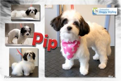 Trimsalon Doggy Styling - Pip
