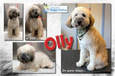 Trimsalon Doggy Styling - Olly