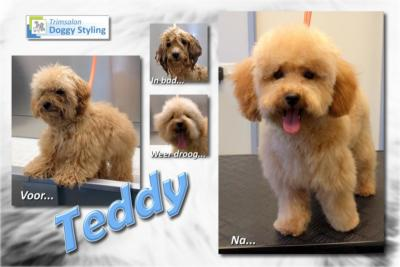 Trimsalon Doggy Styling - Teddy